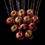 the twelve apples